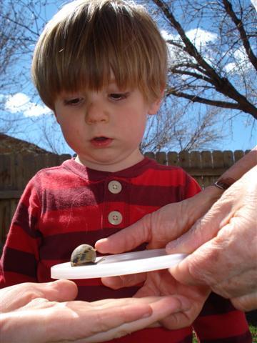 gma-snail-small