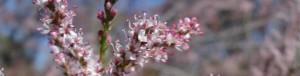cropped-jordan-pale-pink1.jpg