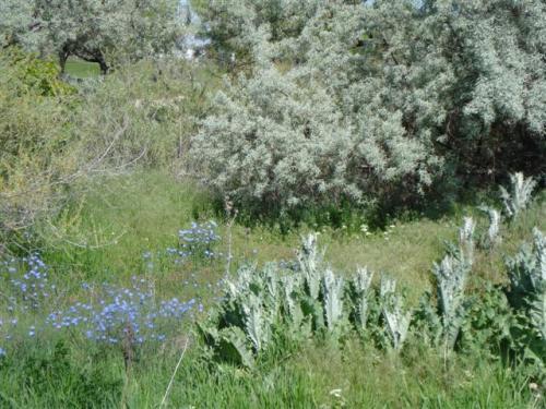 jordan-greens and blue (Small)