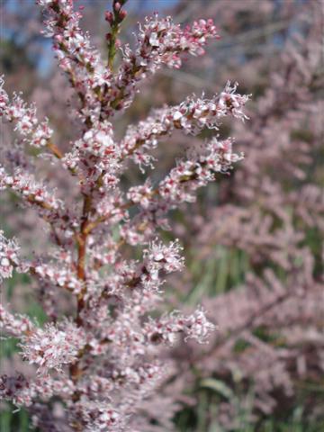 jordan-pale pink (Small)