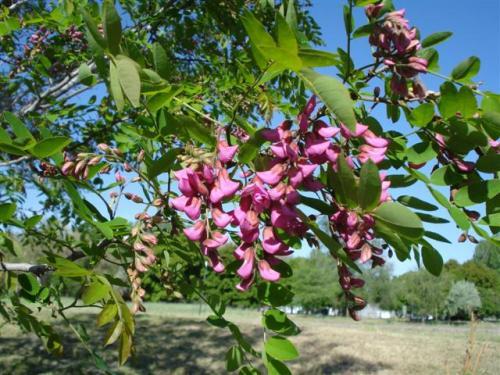 jordan-pink (Small)