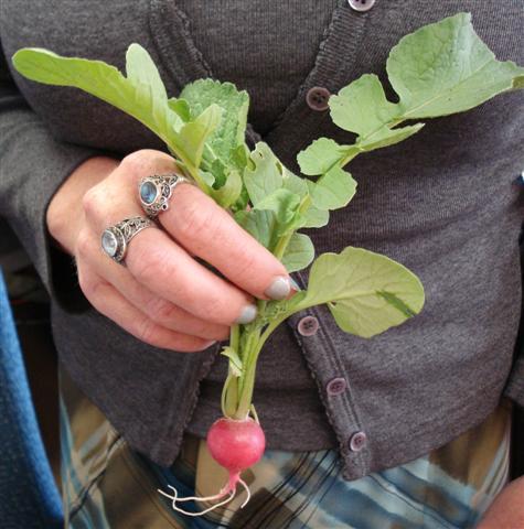radish (Small)