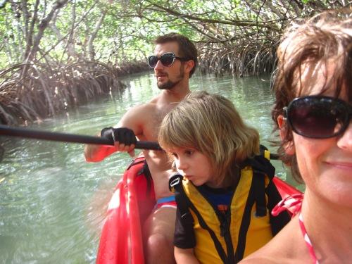 mangrove family