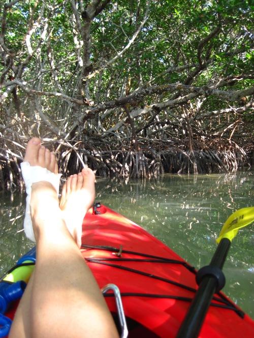mangrove toes