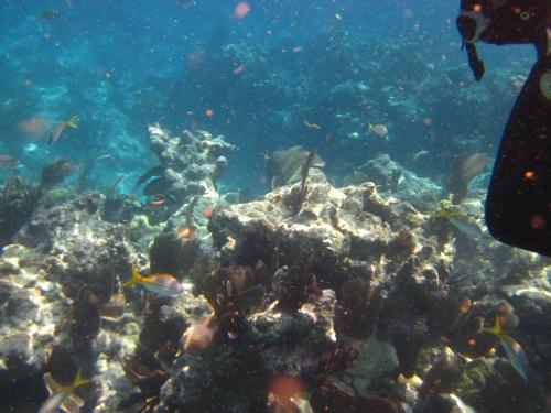 2 reef